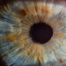 Iris Auge Ayahuasca Erfahrungsberichte